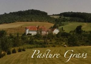 Pasture Grass_ed